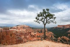 Solitary tree in Bryce Canyon National Park, Utah stock photography