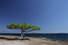 Solitary tree on a cliff. Lesbos, Greece Royalty Free Stock Photos