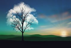Solitary Tree cloud at sunset stock images