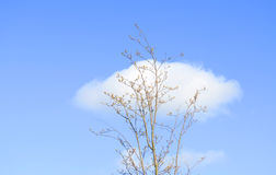 Solitary tree and clouds Stock Photo