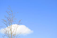 Solitary tree and clouds Royalty Free Stock Images