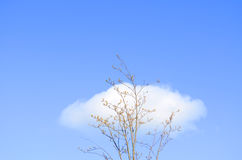 Solitary tree and clouds Stock Image