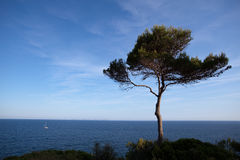 Solitary tree on coastline Royalty Free Stock Images