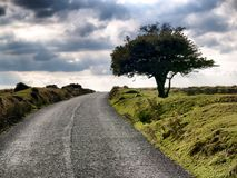 A solitary tree on a desolate country road. Under a cloudy sky royalty free stock images