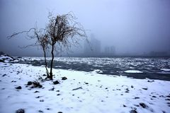 Solitary Tree on the Detroit River waterfront in winter, December 24 2017. Solitary Tree in Windsor, Ontario on the Detroit River waterfront in winter, December royalty free stock photo
