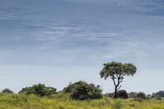 Solitary tree embedded in the African vegetation on the way to northern Angola. Soyo. Africa. Nature stock photos