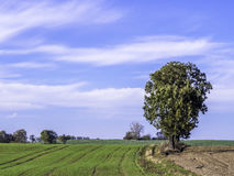 Solitary tree on field Stock Photos