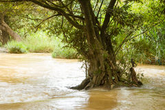 Solitary tree flooded in a fast flowing stream Royalty Free Stock Images