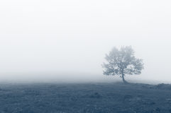 Solitary tree with fog Royalty Free Stock Image
