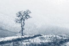 Solitary tree with fog Royalty Free Stock Photo