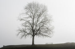 Solitary tree in a foggy morning Stock Photos