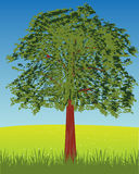 Solitary tree on glade Royalty Free Stock Photo