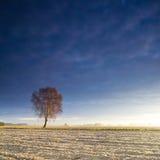 Solitary tree Stock Photo