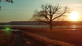 Solitary tree in golden sunset . silhouette of a lonely tree on nature road sunset beautiful landscape. Solitary tree in golden sunset . silhouette of lonely stock footage