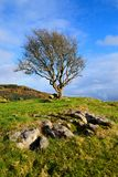 Solitary tree Stock Photo
