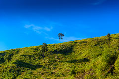 Solitary tree on grassy hill and blue sky with clouds in the bac Royalty Free Stock Photography