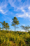 Solitary tree on grassy hill and blue sky with clouds in the bac Stock Photos