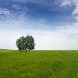 Solitary tree on grassy Royalty Free Stock Image