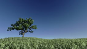 Solitary Tree on Green Meadow against blue sky, stock footage stock footage
