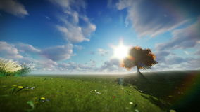 Solitary tree on green meadow, time lapse clouds. Hd video stock video