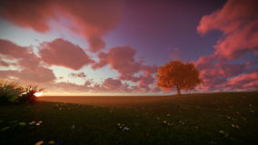 Solitary tree on green meadow, time lapse sunset. Hd video stock footage