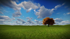 Solitary tree on green meadow, timelapse clouds. Hd video stock video footage