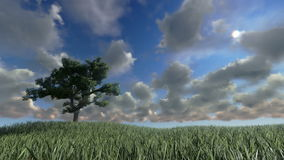 Solitary tree on green meadow, timelapse clouds, stock footage. Video stock footage