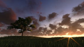 Solitary tree on green meadow, timelapse clouds at sunset, stock footage. Video stock video