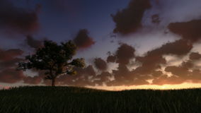 Solitary tree on green meadow, timelapse sunrise, night to day, stock footage. Video stock video footage