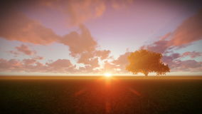 Solitary tree on green meadow, timelapse sunset stock video footage