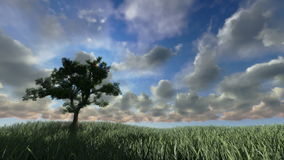 Solitary tree on green meadow, timelapse sunset, stock footage. Video stock video footage