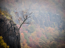 Solitary Tree Hanging on the Edge of the Palisades Cliffs. Detail of a small tree on the edge of a cliff in the Hudson River Palisades near Alpine, New Jersey Royalty Free Stock Image