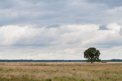Solitary Tree on heathland Stock Images