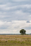Solitary Tree on heathland Royalty Free Stock Photography