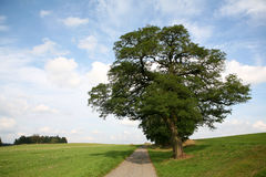 Solitary tree on a hill Stock Photography