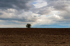 Solitary tree on a hill with mountains in the background Royalty Free Stock Images
