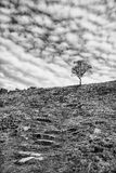Black and white image of a lone, bare, tree on the skyline Royalty Free Stock Photo
