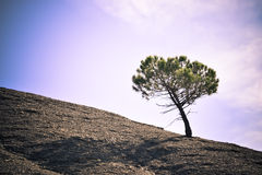 Solitary tree. Lonely silhouette tree at sunset Royalty Free Stock Image