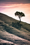 Solitary tree. Lonely silhouette tree at sunset Royalty Free Stock Photo