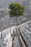 Solitary tree in the middle of a staircase Stock Images