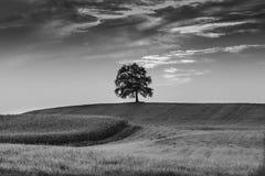 Solitary tree. Monochrome Solitary tree in Feld Stock Photo