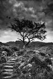 Solitary tree on mountain and footpath landscape in monochrome Stock Image