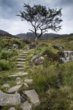 Solitary tree on mountain and footpath landscape in Summer Stock Images
