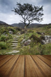 Solitary tree on mountain and footpath landscape in Summer with Royalty Free Stock Photo