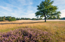 Solitary tree in a nature reserve in the Netherlands Stock Photography