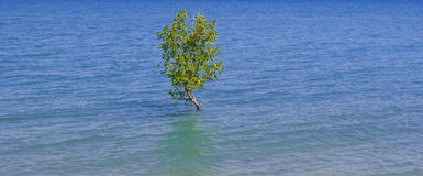 Solitary tree in the ocean Stock Photos