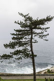 Solitary Tree opposite to the sea Stock Photo