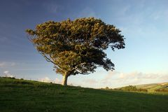 Solitary Tree overlooking Exmoor National Park Stock Images