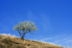 Solitary tree, raw Royalty Free Stock Image