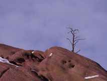 Solitary tree and red rocks Stock Image